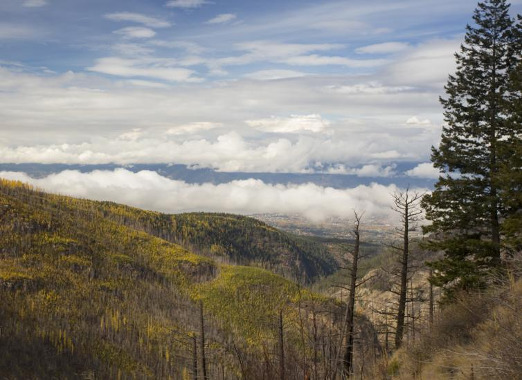 Golden Larches at Myra Canyon