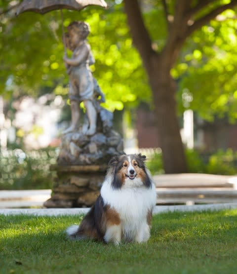 Dog in Seward House Garden