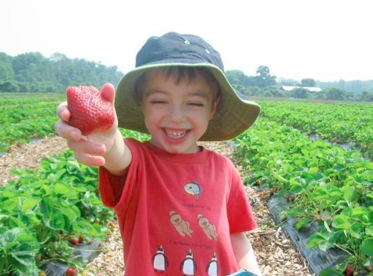 young boy in bucket hat standing in a field smiles while holding up a strawberry