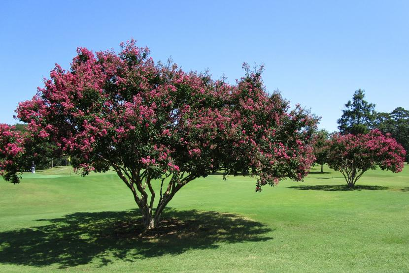 Course Trees