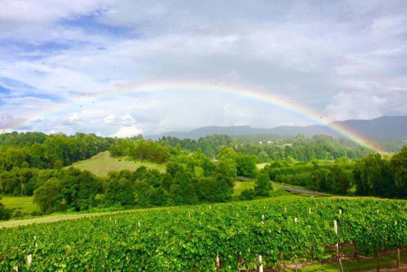 Vineyard and Rainbow