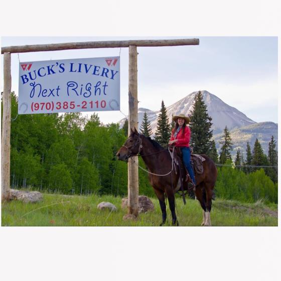 Buck's Livery Horses
