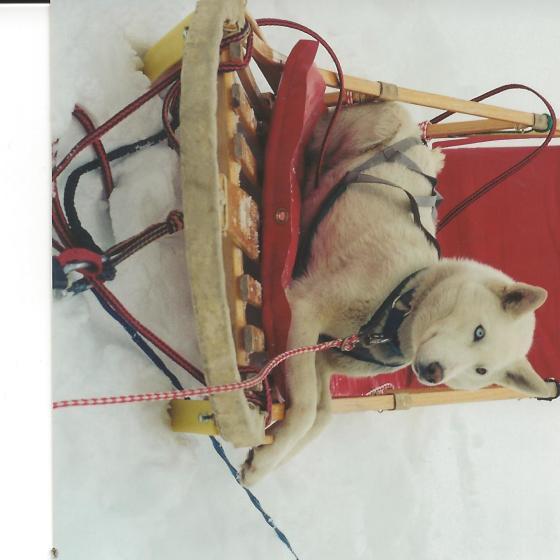 Casper in sled