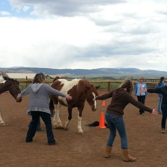 Horse Empower