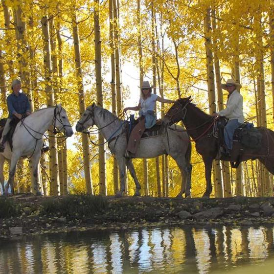 aspen-trees-trail-ride1
