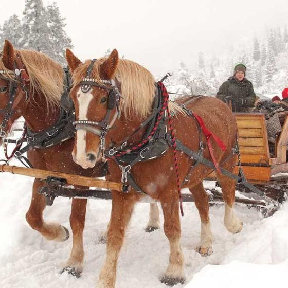family-adventure-winter-sleigh-rides1
