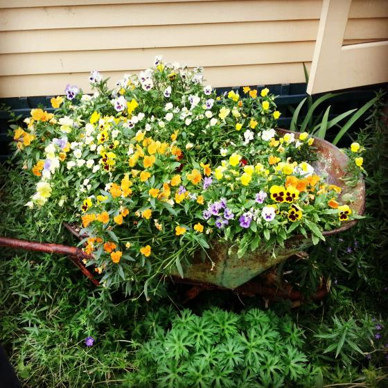 the_wheelbarrow