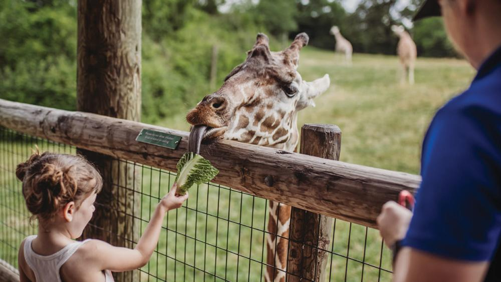Choose Your Own Fort Wayne, Indiana Adventure - Family Fanatic