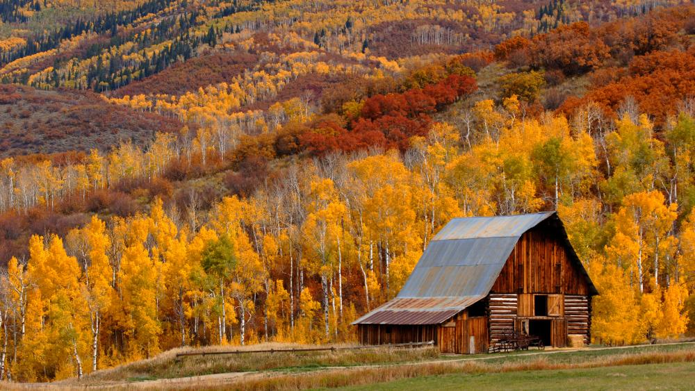 Fall colors come alive around an old barn in Steamboat Springs Colorado