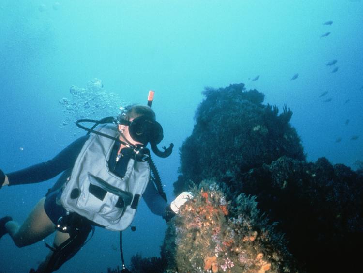 Scuba Diver by Reef