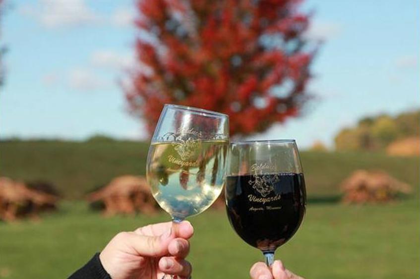Balducci Vineyards 3