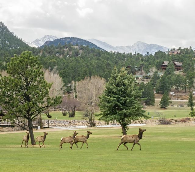 Elk at Lake Estes 9-Hole Golf Course