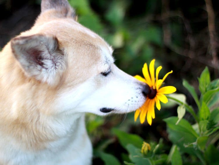 dog friendly events article - botanical garden