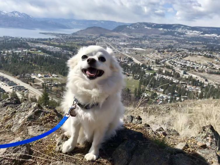 Dog at Mount Boucherie