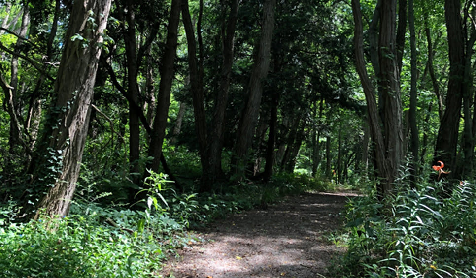 Brincka Cross Gardens Michigan City wooded trail