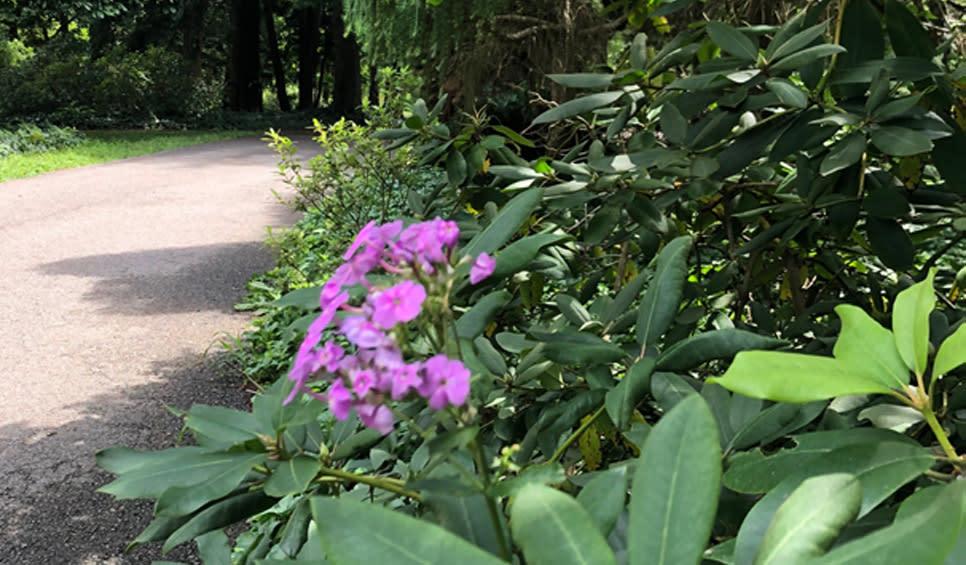 Brincka Cross Gardens Michigan City flowers on the trail