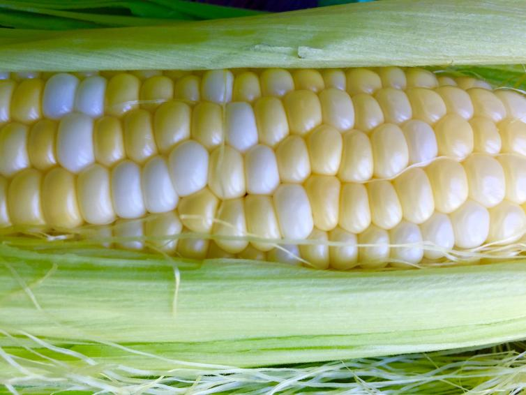 Century Farms Corn on the Cob
