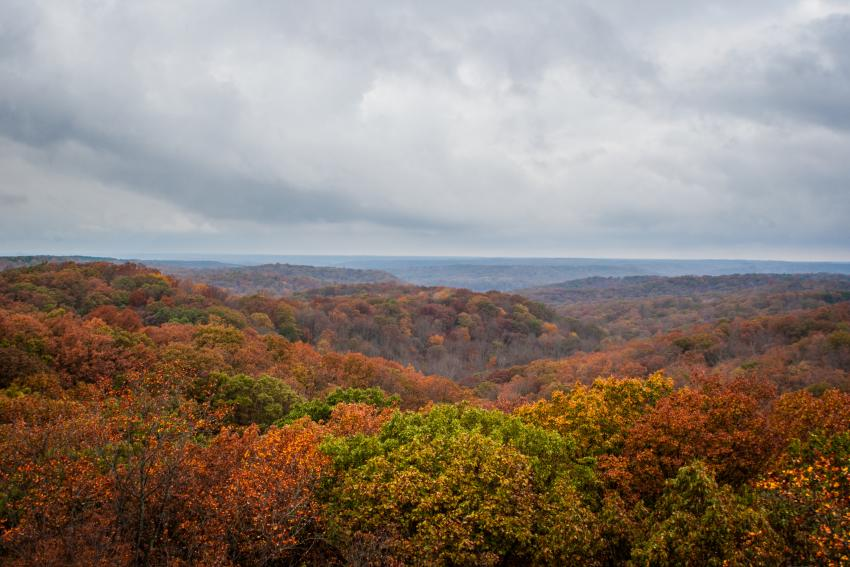 Fall Firetower - Hoosier National