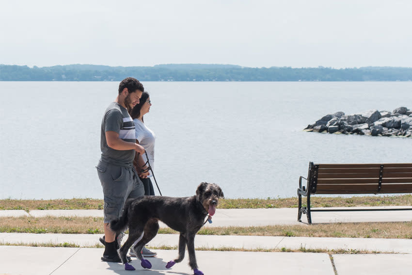 geneva-seneca-lake-dog-walking