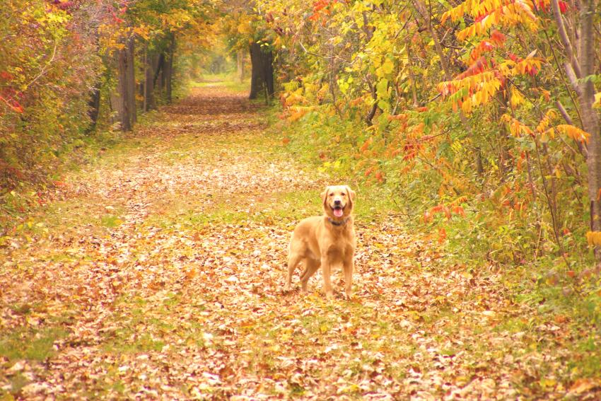 ontario-pathways-canandaigua-fall-dog-friendly