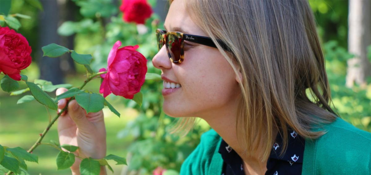 A photo of a rose bush