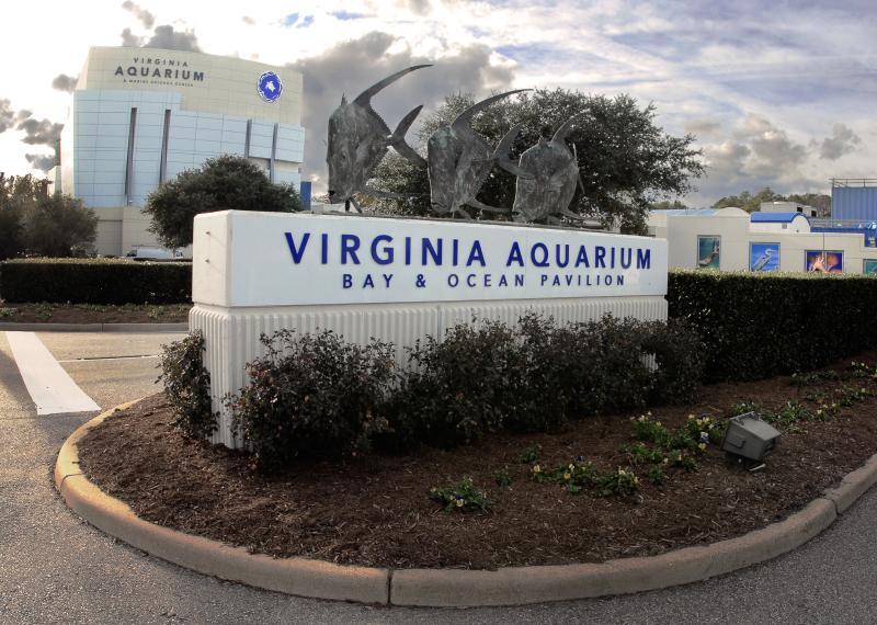 Arts & Culture - History & Museums - Virginia Aquarium - Virginia Aquarium 3.jpg
