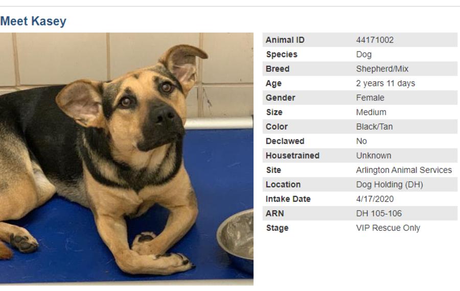 dog 2 adoption blog