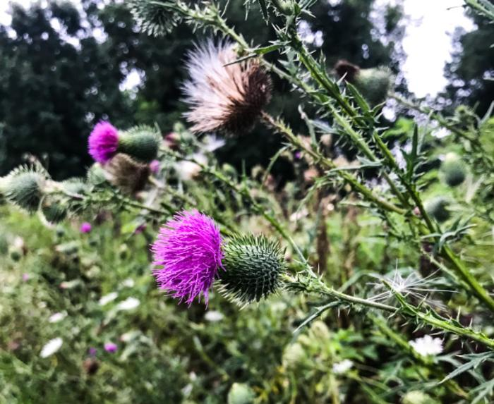 Gabis Arboretum flowers - Carolyn Hricik