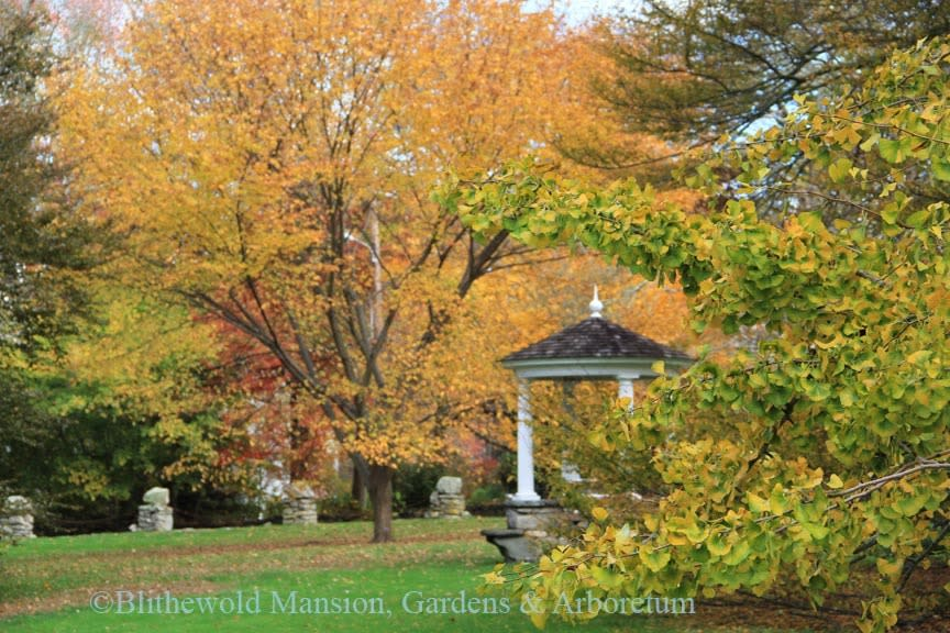 Blithewold Fall Foliage
