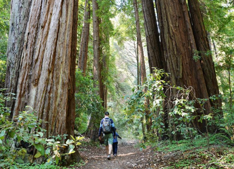 Memorial_Park_Walking_Around_Redwoods_SanMateoCounty_SiliconValley