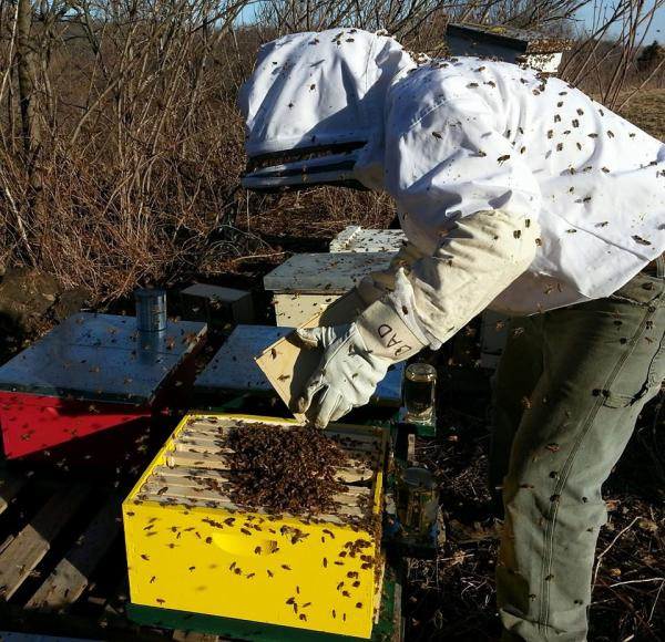 Bee Keeper at Standing Stone Honey Products