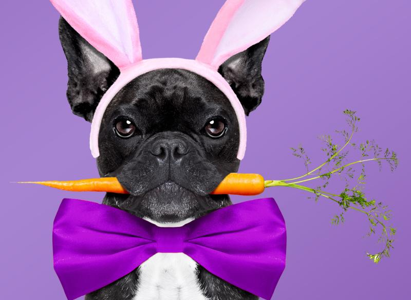 Doggie Easter photos