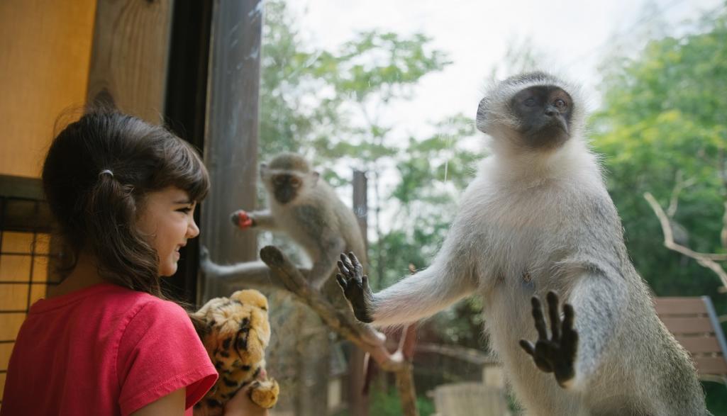 Primate Exhibit - Columbus Zoo