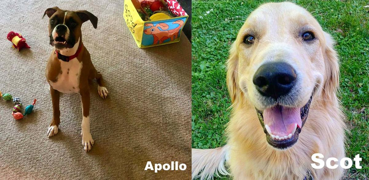Apollo & Scot
