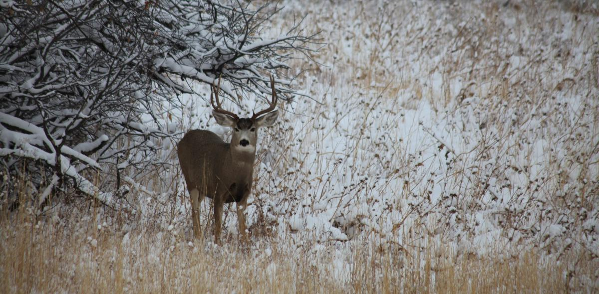 Hunting is very popular in the Steamboat Springs area in the fall and early winter.