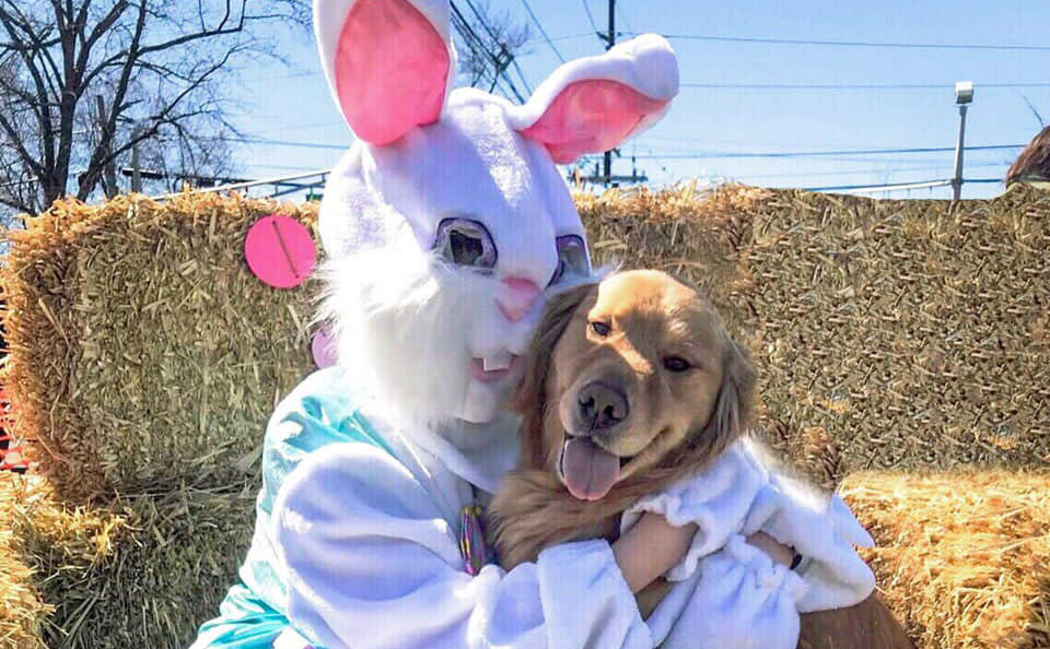 Easter bunny hugging a golden retriever at a New Jersey Egg Hunt