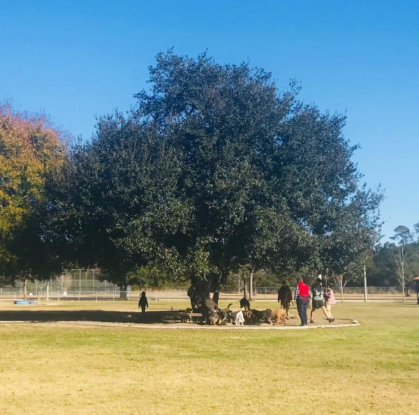 Pelican Bark Dog Park