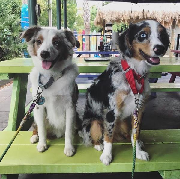 BindiandBaylor Instagram - dog