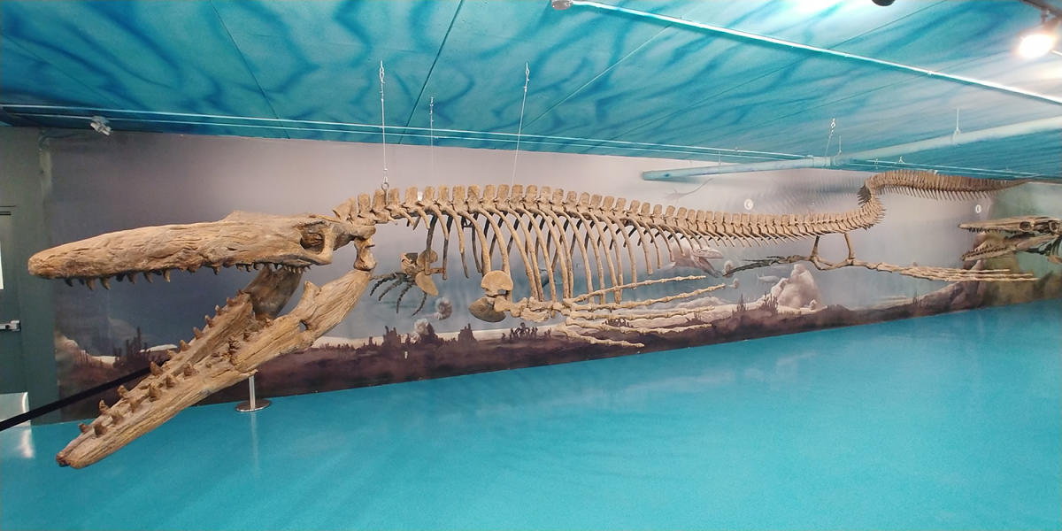 Bruce the mosasaur at the Canadian Fossil Discovery Centre