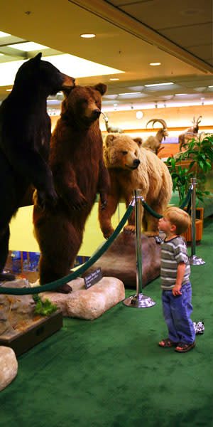 Provo Weekend Getaway - BYU Animal Museum