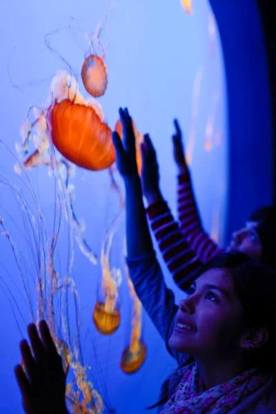 Jellyfish Exhibit at the Monterey Bay Aquarium