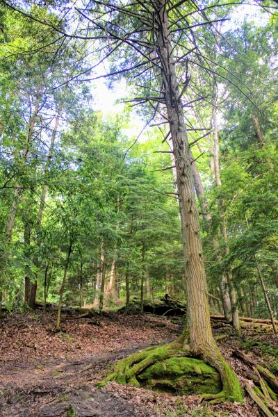 Scenic view of trees and woods in Hocking Hills