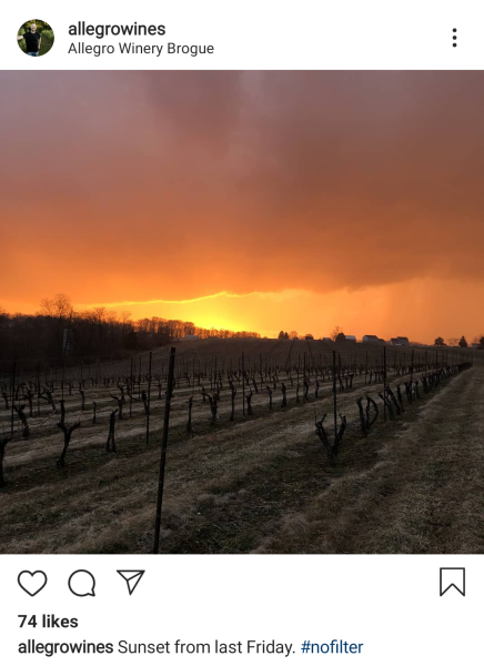 Allegro Instagram