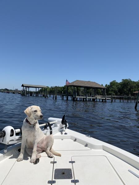 A dog sitting on a boat in the waters of Georgia's Golden Isles