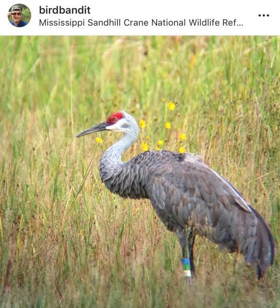 Mississippi Sandhill Crane National Wildlife Refuge