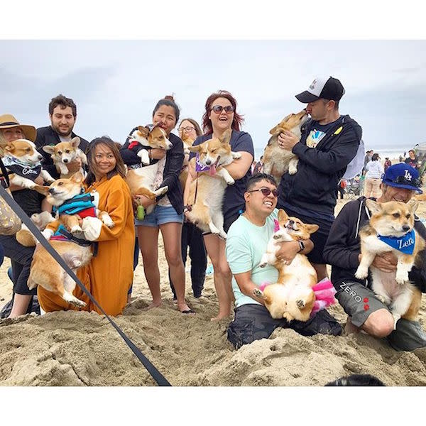 Some very happy corgi owners! PC: @corgi_zero