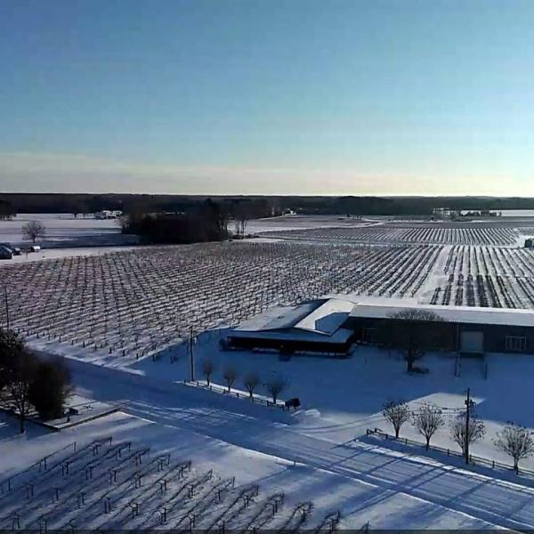 Hinnant Vineyards in snow