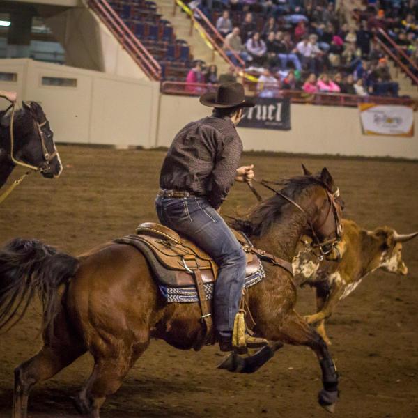 Horses PA Farm show