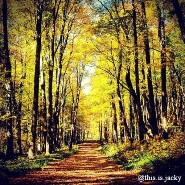 Bear Swamp State Forest photo credit instagramer this.is.jacky
