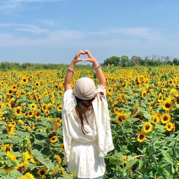 Sunflower Garden at Beasley's Orchard